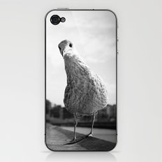Inquisitive seagull iPhone & iPod Skin