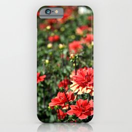 VIBRANT RED DAHLIAS - IN THE LATE AFTERNOON SUNSHINE iPhone Case