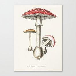 The Real Mushroom Canvas Print