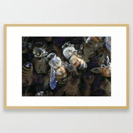 Swarm Framed Art Print