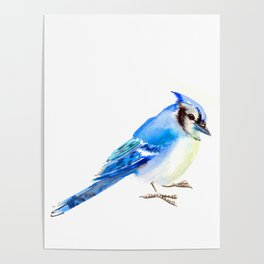 Blue Jay design. blue jay home decor Poster