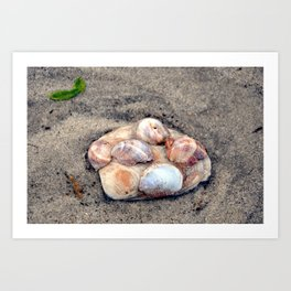 Clam shell Art Print