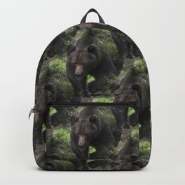 King of forest, male brown bear approaching Backpack