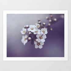 Flower in the mist Art Print
