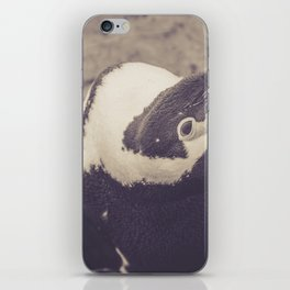 Adorable African Penguin Series 1 of 4 iPhone Skin