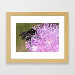 Bumblebee on Thistle Flower 02 Framed Art Print