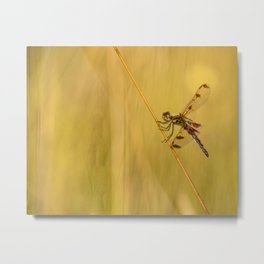 Dragonfly Pole Dance ~ Ginkelmier Inspired Metal Print