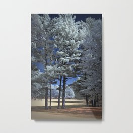Infrared Photograph of Pine Trees in Garfield Park Metal Print