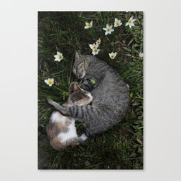 Sleep [A CAT AND A KITTEN] Canvas Print
