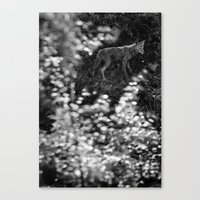 coyote Canvas Prints featuring coyote by Bunny Noir