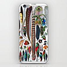 Plumes iPhone & iPod Skin