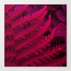 red fern abstract II Canvas Print
