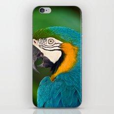 Polly Wanna Cracker?  iPhone & iPod Skin