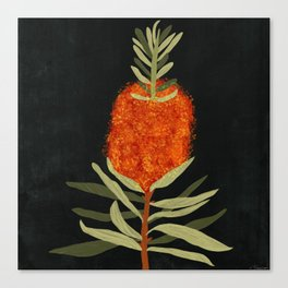 Bottlebrush Flower Canvas Print