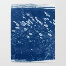 Summer daisies cyanotype 1 Poster