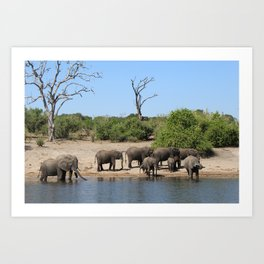 Elephant Safari Art Print