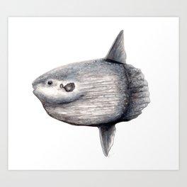 Ocean Sunfish (Mola mola) Art Print