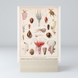 Adolphe Millot - Mollusques 01 - French vintage zoology illustration Mini Art Print