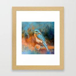 A Splash Of Bluebird Framed Art Print