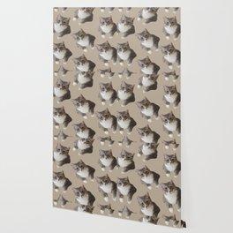 beige tan grey american wirehair cat pattern Wallpaper