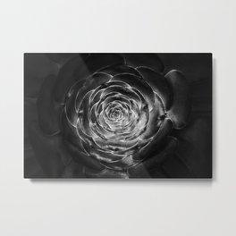 Aeonium Metal Print