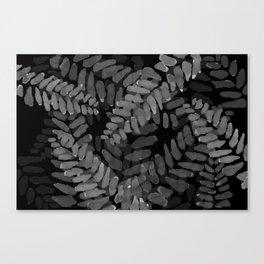 Mimosa on reverse Canvas Print