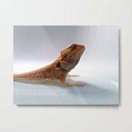 Bearded Dragon Metal Print