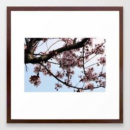 Pretty Pink Blooms Framed Art Print