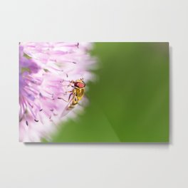 Hoverfly on Allium - Onion Flower 4 Metal Print