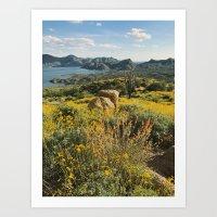 Arizona Spring Mountain Bloom Art Print