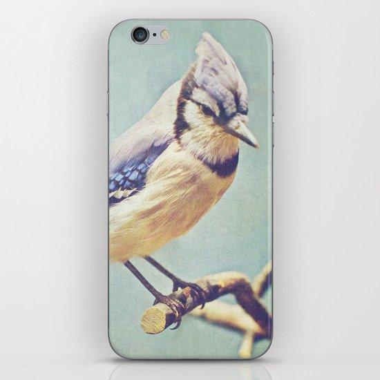 Virginia Bluejay iPhone & iPod Skin