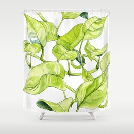 Devils Ivy Illustration Shower Curtain