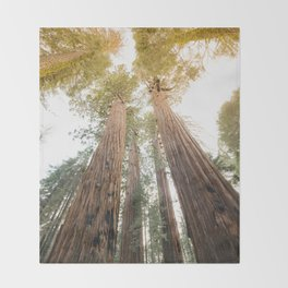 Redwood Forest Canopy Sunset Throw Blanket