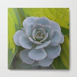 Blue Succulent and Hosta Metal Print