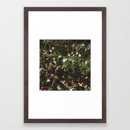 wood anemones Framed Art Print