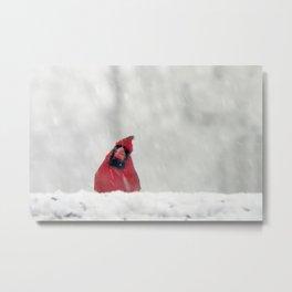 blizzard bird Metal Print