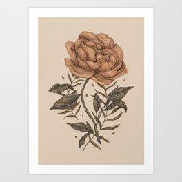 Peony and Ferns Art Print