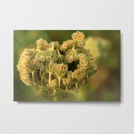 Queen Anne's Lace Flower About to Bloom Metal Print