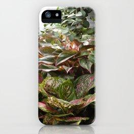 Aglaonema + Hoya     The Houseplant Collection iPhone Case
