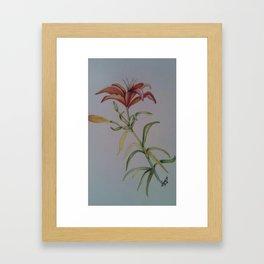 Lily 2 Framed Art Print