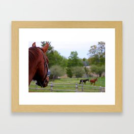View from the next Paddock Framed Art Print