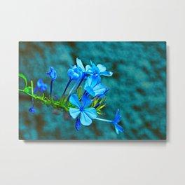 Blue Plumbago Flowers Branch Metal Print