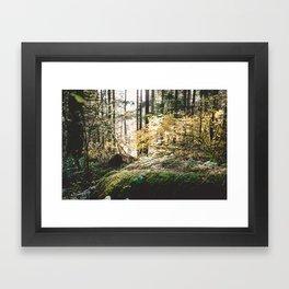 Hidden forest horizontal Framed Art Print