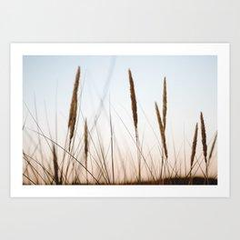Beach grass III | Calm natural fine art print | Netherlands Art Print