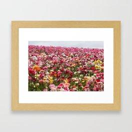 Carlsbad Flower Fields Framed Art Print