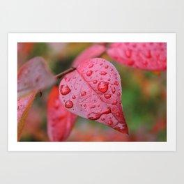 Red Leaf & Raindrops Art Print