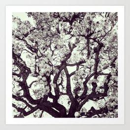 White Tree Blossom Art Print