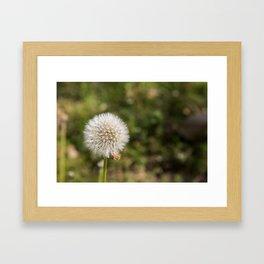 Dandilions Framed Art Print