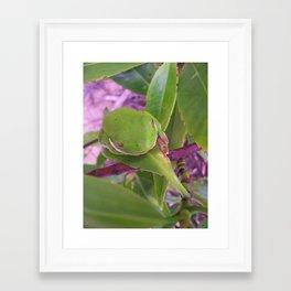 Hidden Frog Framed Art Print