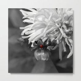 Ladybug on a Dahlia Bud-B&W with red ladybug Metal Print